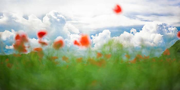 Poppy Fantasy by Sarah-fiona  Helme