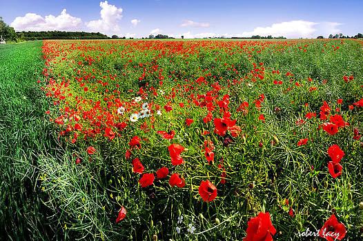 Poppy Field by Robert Lacy