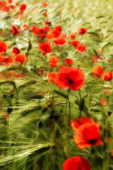 Poppy Fields by Norman Hall