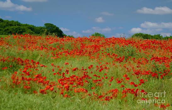 Poppy Fields by Tess Baxter