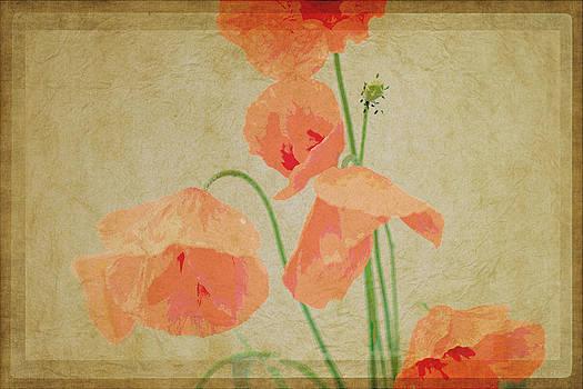 Poppy by Nadeesha Jayamanne