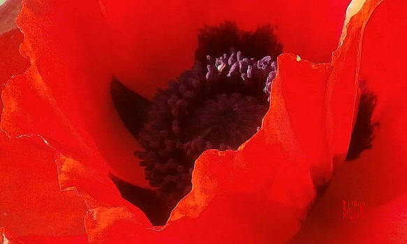 Poppy Passion by J R Baldini Master Photographer
