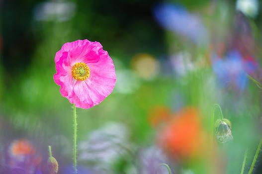 Poppy Pose by Sarah-fiona  Helme