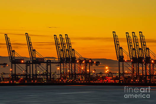 Svetlana Sewell - Port of Felixstowe