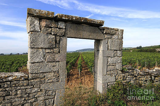 BERNARD JAUBERT - Portal of vineyard in Burgundy near Beaune. Cote d