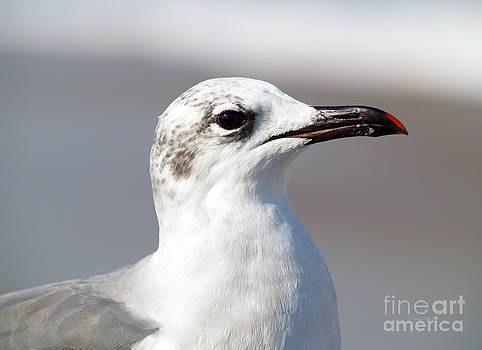 Portrait of a Gull by Patricia Griffin Brett
