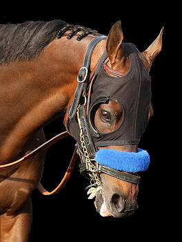 Portrait of Game On Dude by Cheryl Ann Quigley