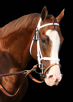 Portrait of Will Take Charge by Cheryl Ann Quigley
