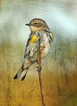 Portrait of Yellow-Rumped Warbler by Cheryl Ann Quigley