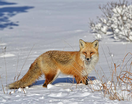 Posing in the snow by Sami Martin