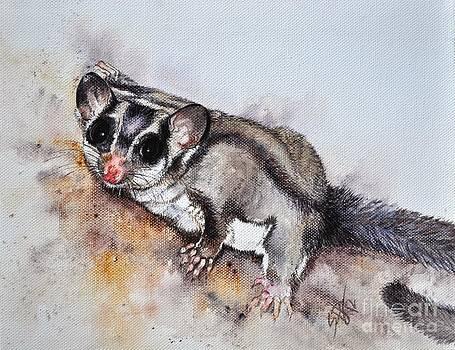 Possum cute Sugar Glider by Sandra Phryce-Jones