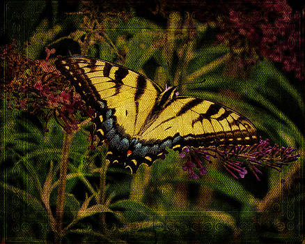 Pamela Phelps - Power of the Butterfly