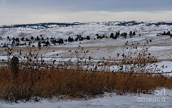 Linda Knorr Shafer - Prairie Snow
