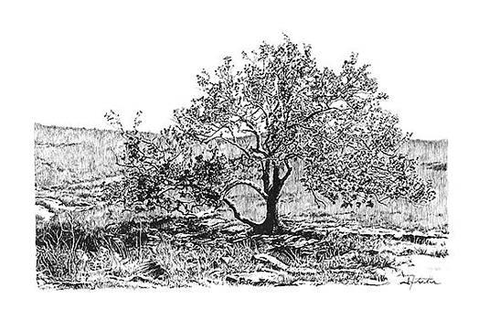 Prairie Tree by Gary Gackstatter