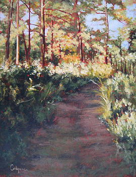 Prairie Walk by Carlynne Hershberger