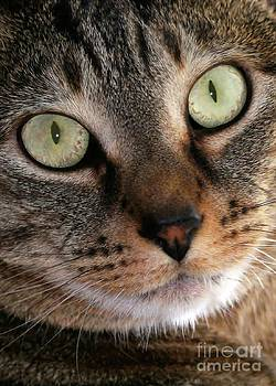 Sabrina L Ryan - Precious Kitty
