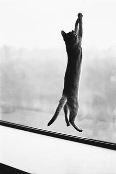 Joan Baron - Predator Prey Cat Style