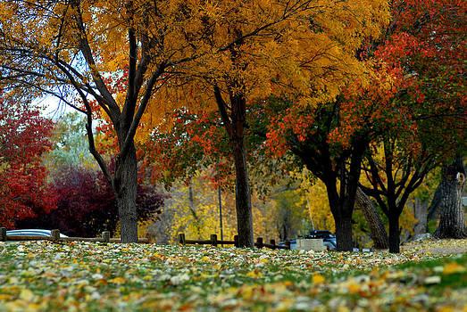 Prescott Fall by Kasie Morgan