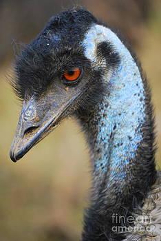 Pretty Bird by Tracey Hampton