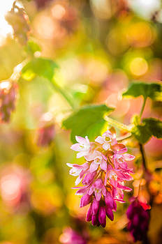 Pretty in Pink by Brian Xavier