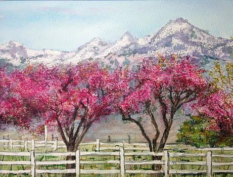 Pretty in Pink by Carol Warner
