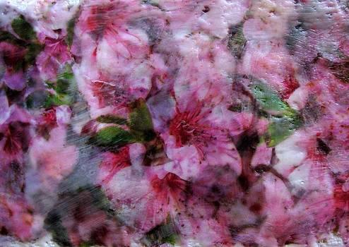 Pretty in Pink by Dallas  Manicom