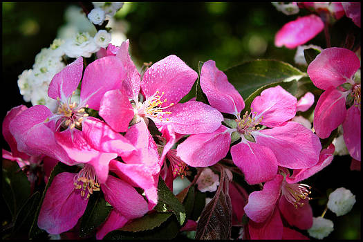 Pretty in Pink IV by Aya Murrells