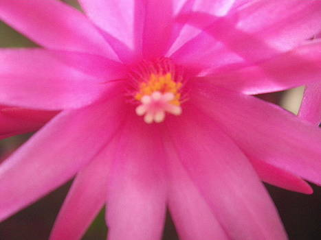 Pretty In Pink by Warren Schoel