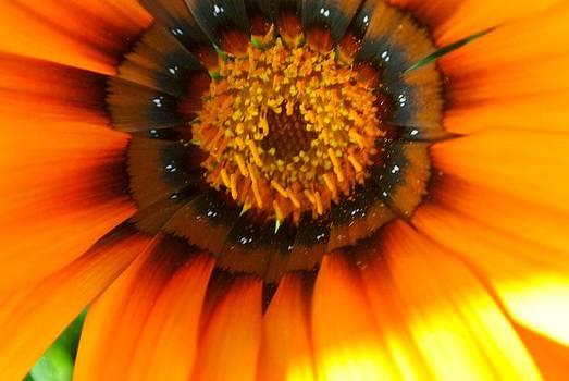 Pretty Petals 3 by Tamara Bettencourt