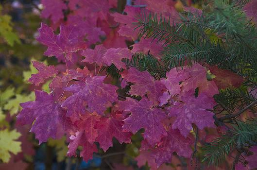 Saija  Lehtonen - Pretty Pink Autumn