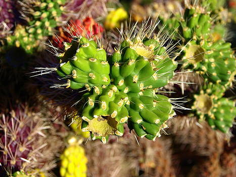 Prickly Cacti by Denny Ragan