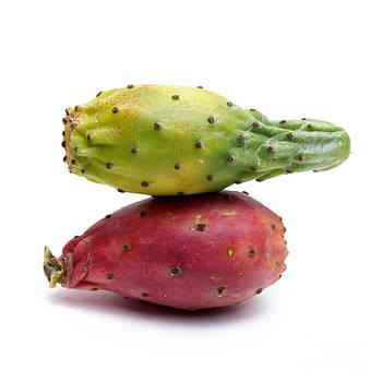 BERNARD JAUBERT - Prickly pear