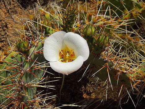 Prickly Protected by Donna Jackson
