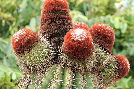Prickly Situation by Jean Blackmer