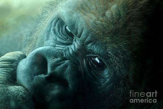 Primate Eyes by Theresa Willingham