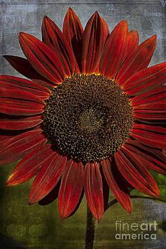 Primitive Sunflower 2 by Cindi Ressler