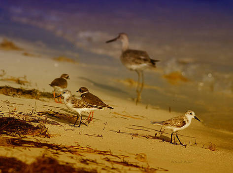 Deborah Benoit - Private Beach For The Birds