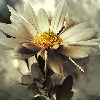 Promise of Eternity by Darlene Kwiatkowski