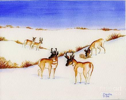 Pronghorn Antelope by Lori Ziemba