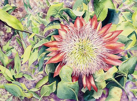 Protea by Martha Shilliday