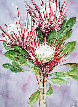 Proteas by Lyndsey Hatchwell