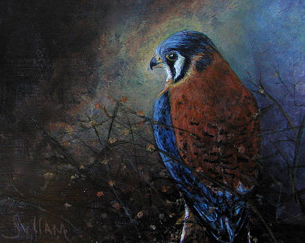 Protrait of a Kestrel by JoAnne Sullam