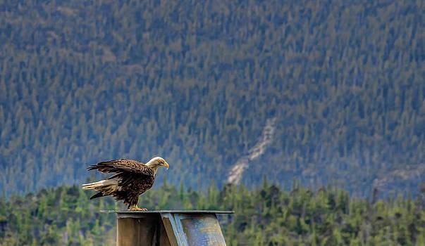 Proud Bird by Timothy Latta