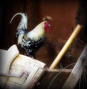 Proud Farm Rooster by Jo Anna Wycoff