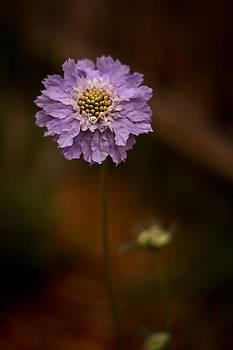 Proud flower by Linda Storm