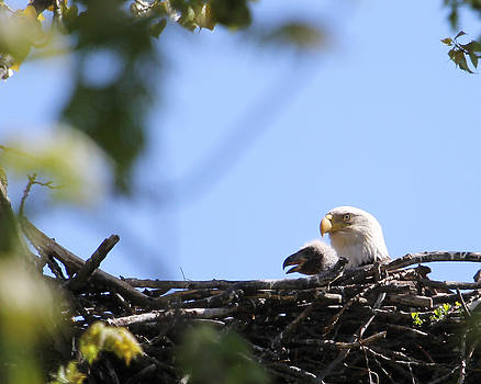 Proud parent by Bruce  Morrell