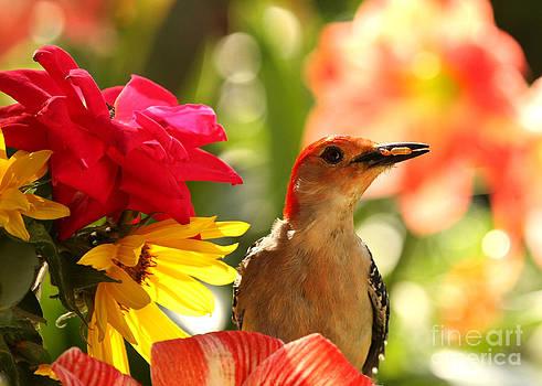 Proud Woodpecker Posing by Luana K Perez