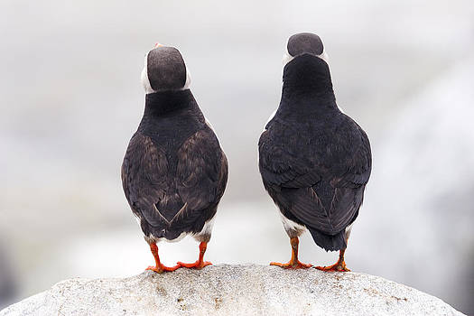 Puffin Philosophers by Brent L Ander