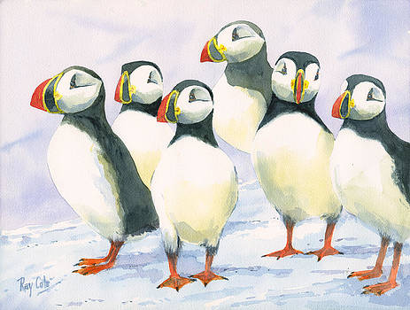Puffins by Ray Cole