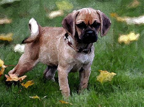 Puggle Puppy Dog Portrait by Olde Time  Mercantile